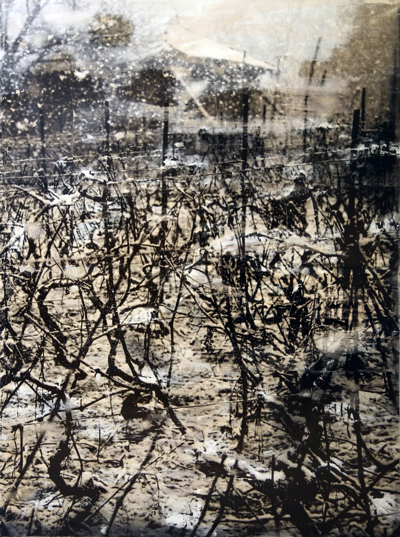 Viñas de invierno 2, 2006<br/>