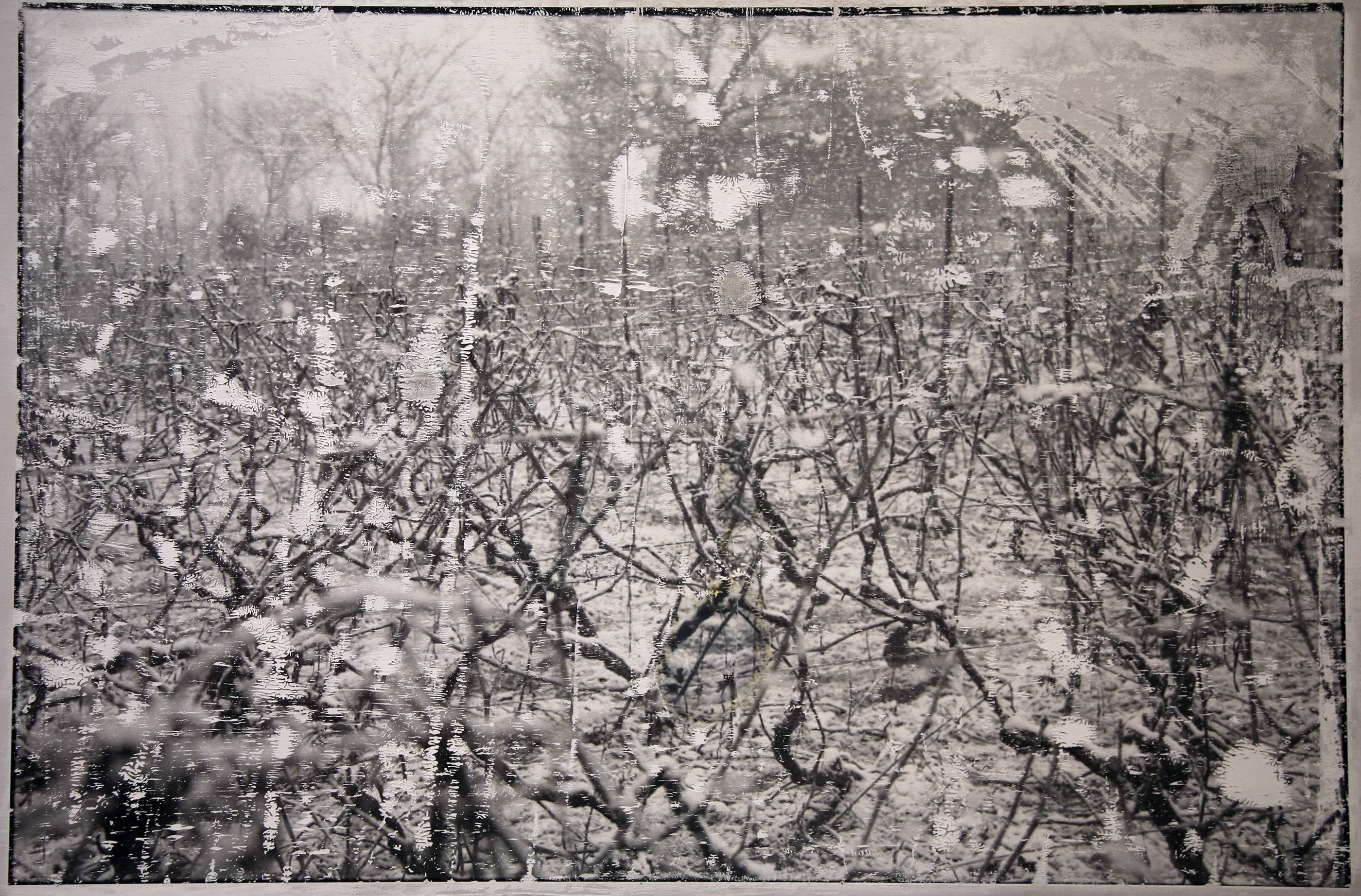 Viñas de invierno III, 2006<br/>