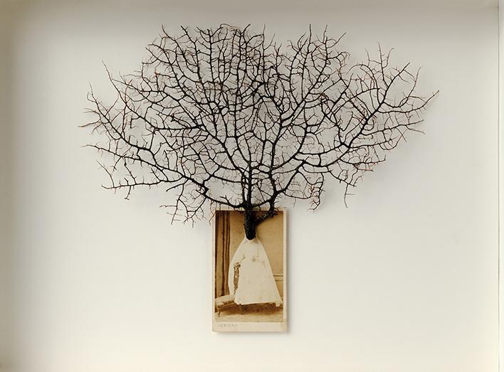 Meditación<br/>Caja de madera, fotografía encontrada. 2018. 47 x 36 x 7 cm