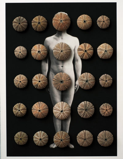 Cuerpos 1<br/> Caja de madera, fotografía impresa sobre papel Canson edition blanco natural 250 gr. y esqueletos de erizo de mar 27,5 x 38 cm. Ed.: Única / Unique