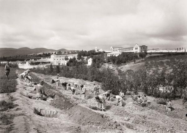 Plantación de árboles en Dar Riffien, 1926.<br/>Gelatina de plata / Silver gelatin