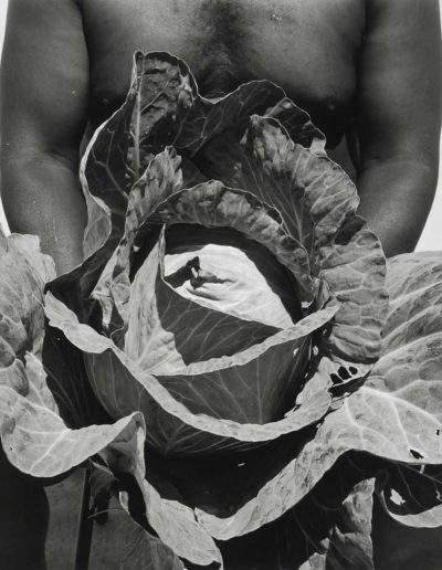 Reverand Andrew Williams' Cabbage - Rosedale, MS 1998<br/>Impresión digital