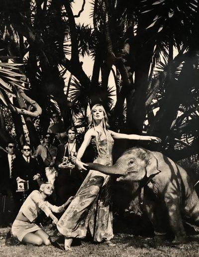 Oriol Maspons. Elefante, 1967<br/>Gelatina de plata / Silver gelatin